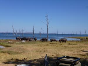Hippos out sunning themselves on the edge of Lake Kariba