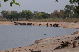 Elephants at Horeshoe bay