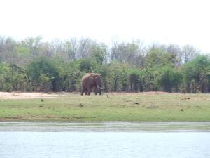 Large Elephant Bull on the edge of Lake  Kariba