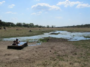 Kicking Back in Hwange